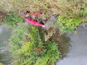 Tracking Ratty: Week 2 of the Water Vole Displacement Project
