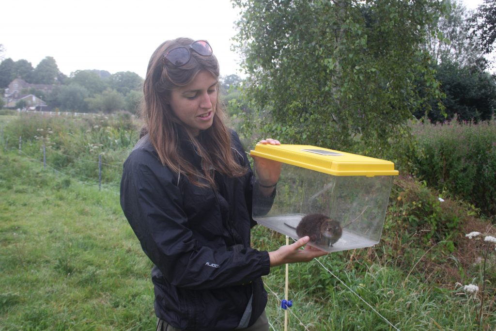 Charlotte getting ready to release a freshly collared water vole