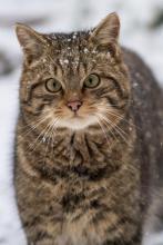 WildcatKitten_HarryMartin_6X4d44e