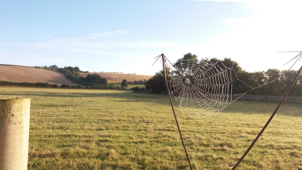 Beautiful frosty morning at one of our experimental sites