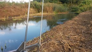 Tracking ratty: Week 6 of the Water Vole Displacement Project