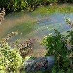 Tracking ratty: Week 9 of the Water Vole Displacement Project