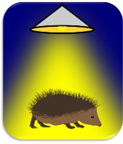 Introducing the Hedgehog and Lighting Project