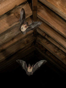 Mammal Society Chair, Prof. Fiona Mathews joins new government bat conservation panel