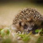 Call for public to help wildlife conservation