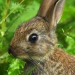 Call for public to help wildlife conservation by monitoring mammals with new app