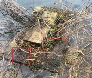 Water vole Wednesday – National #MammalWeek2018