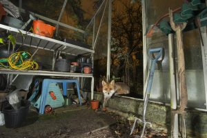 Fox_Greenhouse_MG_0059